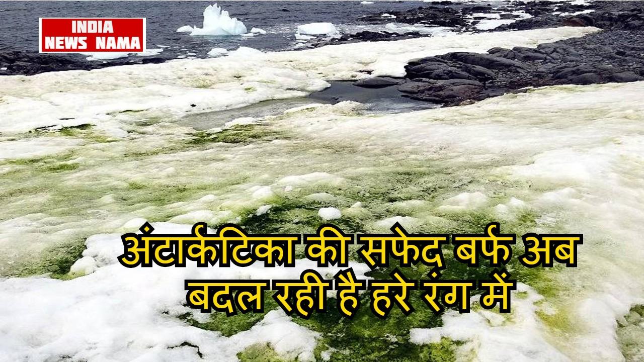 अंटार्कटिका की सफेद बर्फ अब बदल रही है हरे रंग में